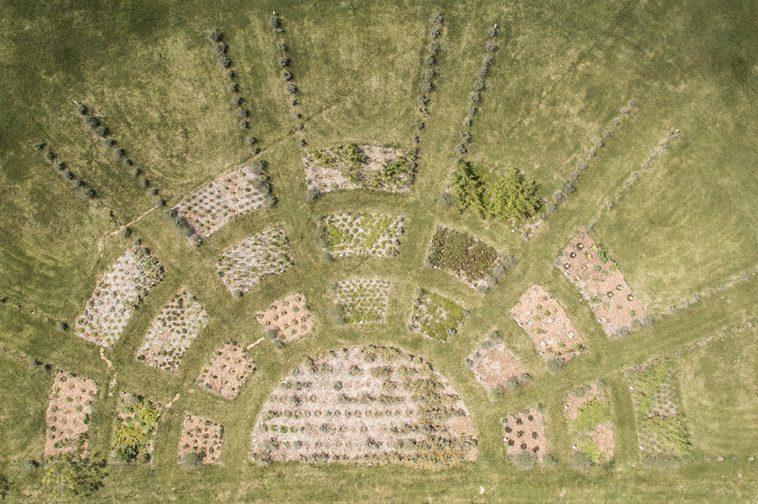 Progetto Il Giardino dei Cinque Sensi  Griffin's Resort Orvieto 2015 foto di Giuliana Finzio